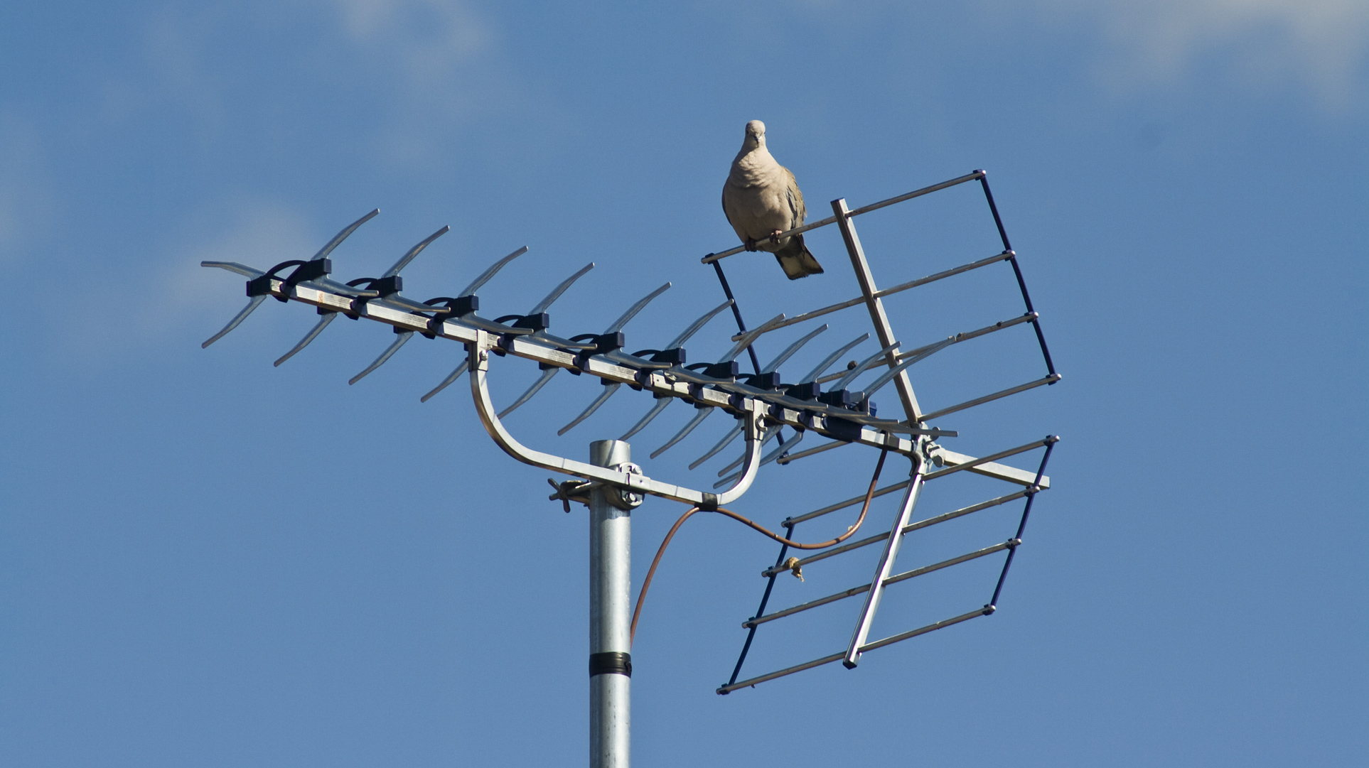 Antenni ja pulu